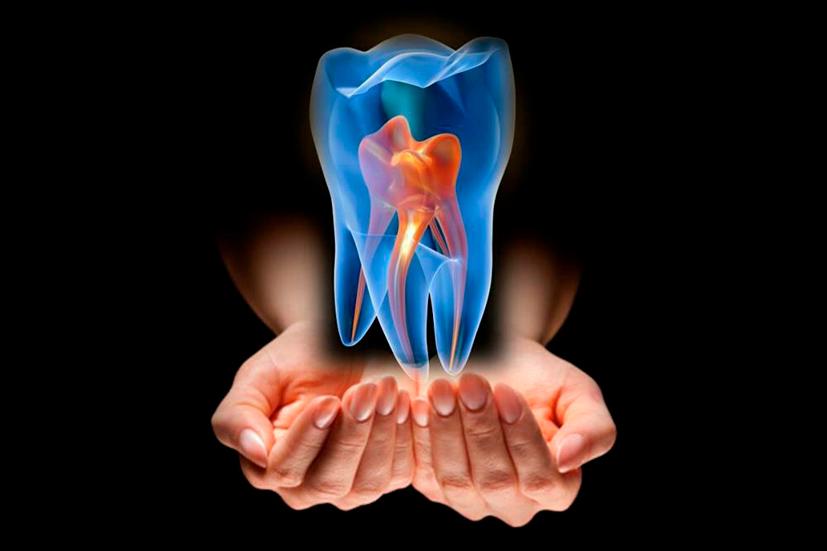 Células madre dentales, lo que debes saber